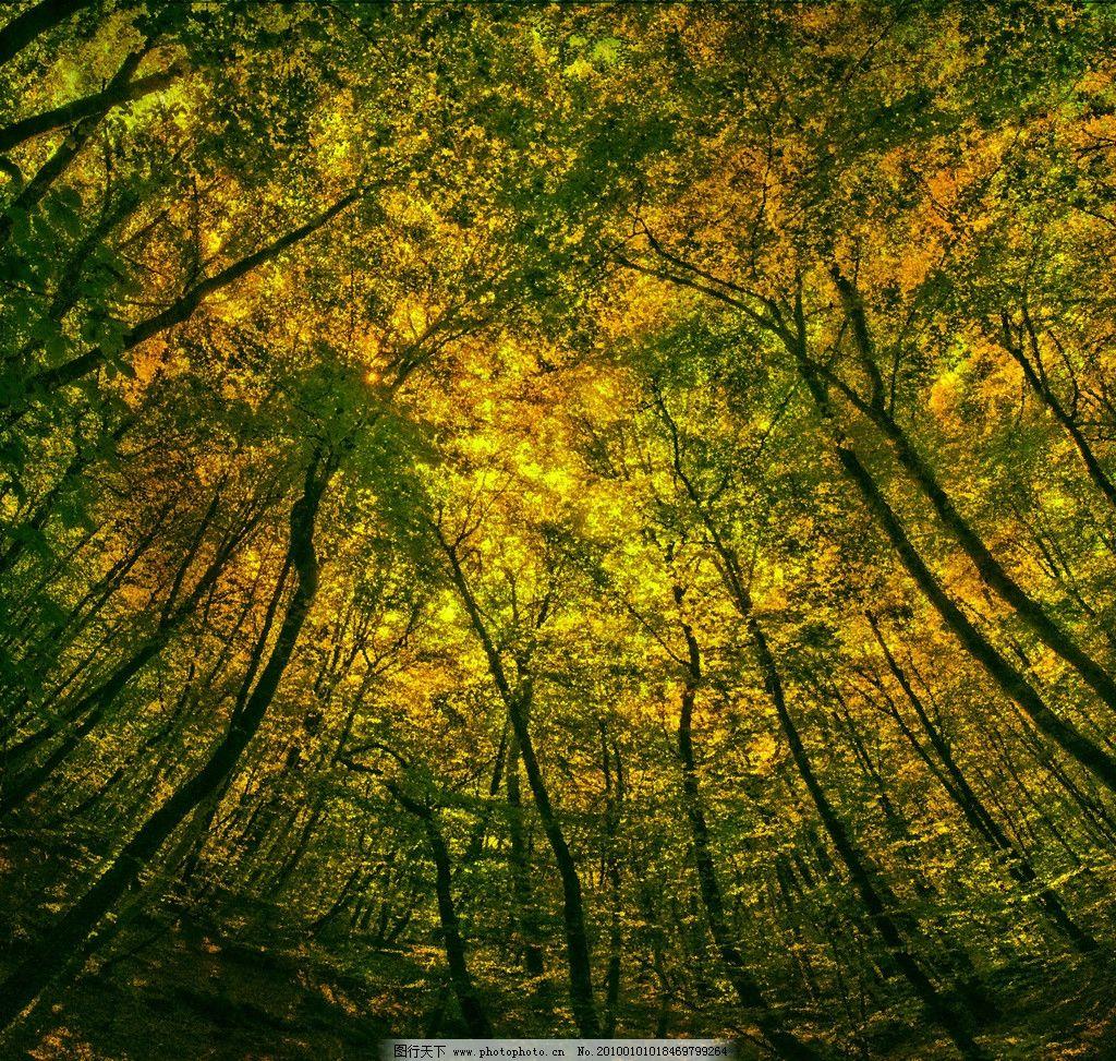 树林 大自然 景观 景象 生物 植树 田野 森林 树木 风景漫画 动漫动画