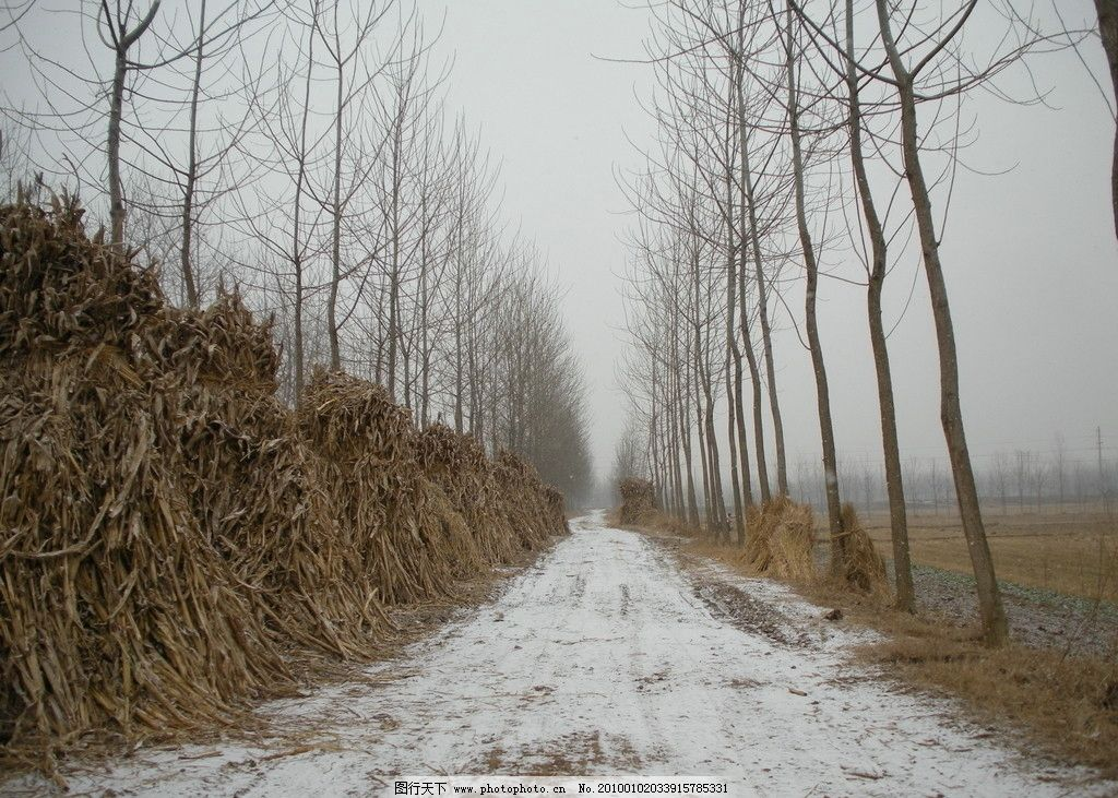 冬雪 冬天 下雪 乡村小路 草垛 雪地 树木 田野一望无垠 树枝 国内