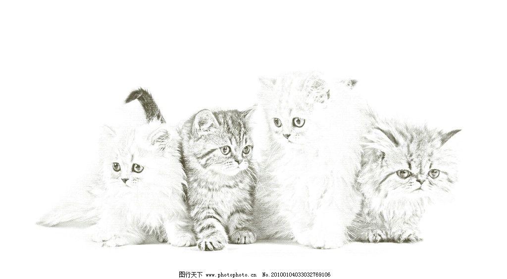可爱猫咪素描图片