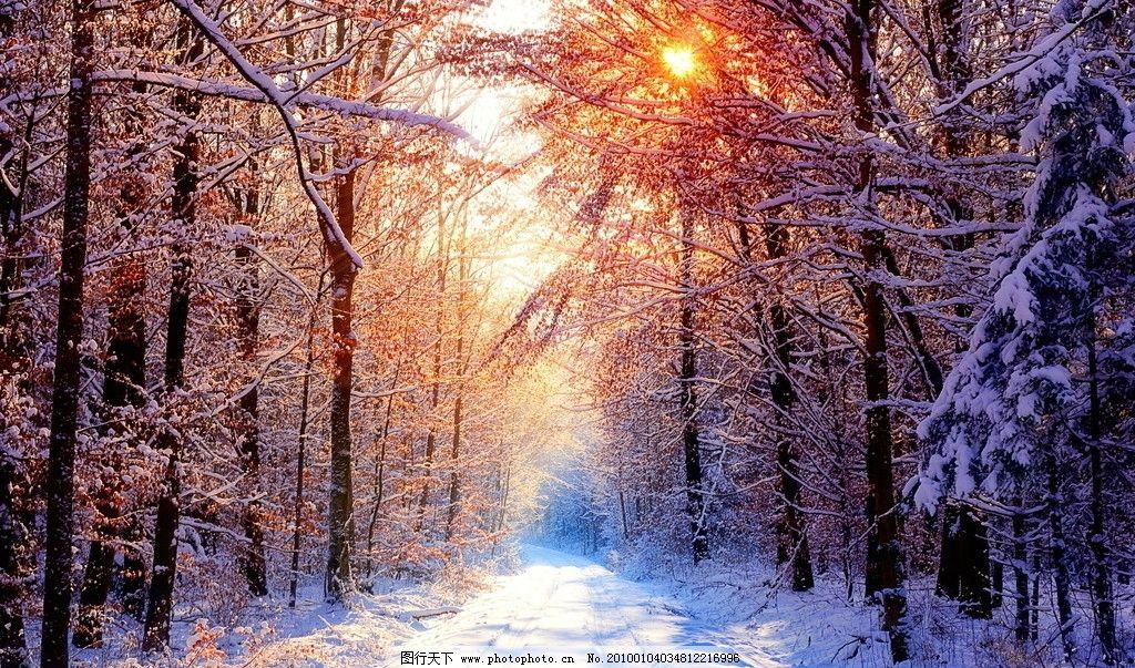 雪景 国外风景 摄影 照片 泛黄植物 道路 树叶 桌面 壁纸 背景