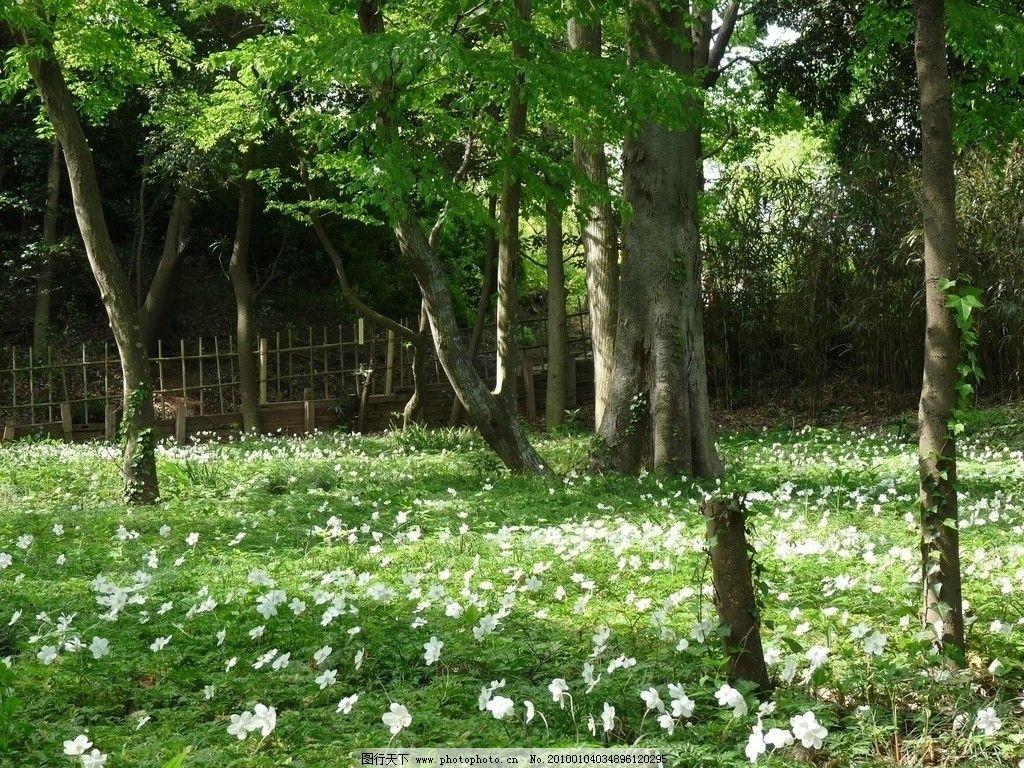 花草 花卉 草地 树林图片