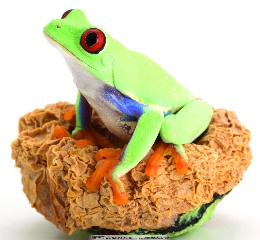 青蛙 自然生物 绿蛙 野生生物 蛙类 大眼生物 青蛙窝 黄色爪子 红黑