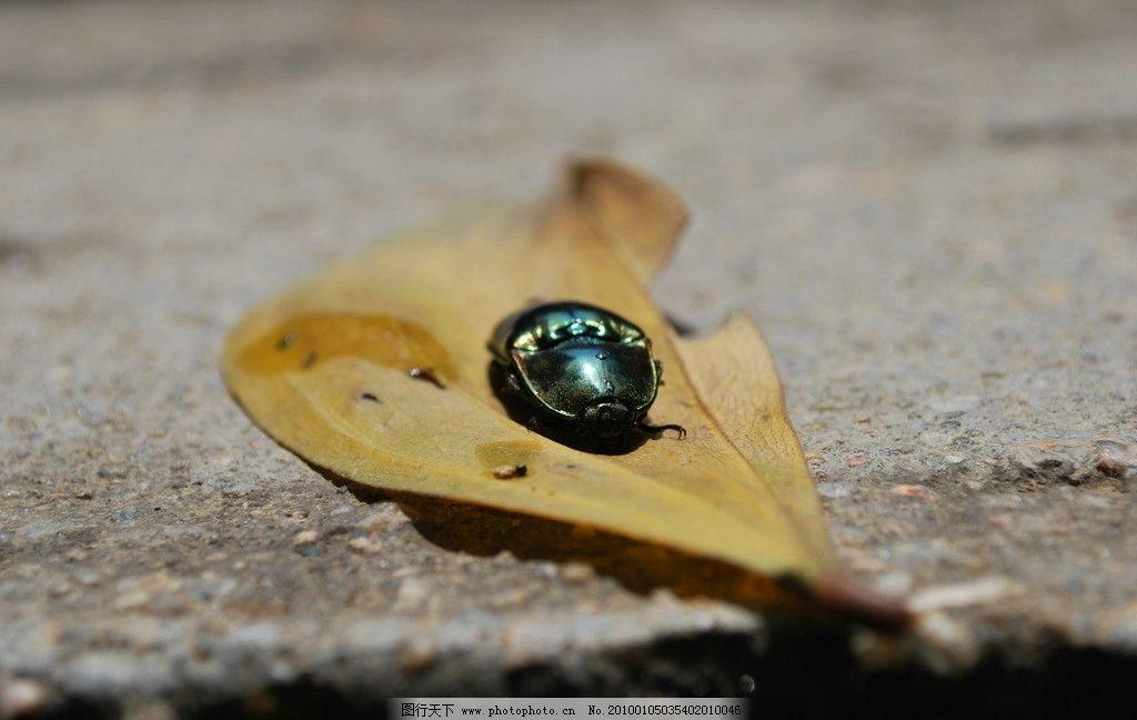 简笔画动物小甲虫