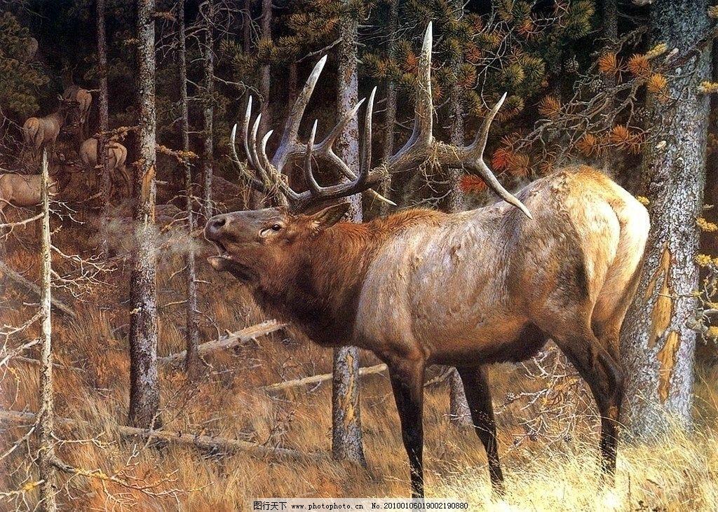 野生动物 麋鹿图片