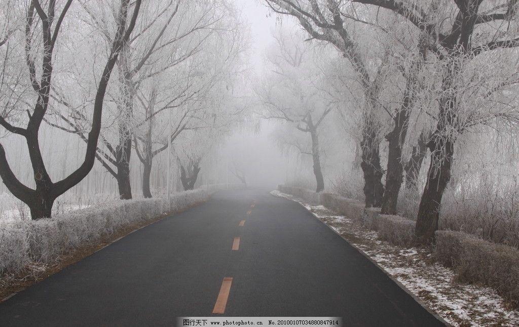 雾中树 路 冬 雾 树 树挂 枯树 白树 东北 自然风景 自然景观 摄影 72