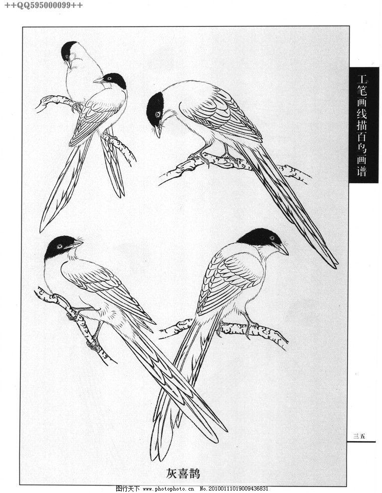 花鸟图09 工艺美术 美术 图案 花草 花鸟图 白描 线描 黑白稿 手绘