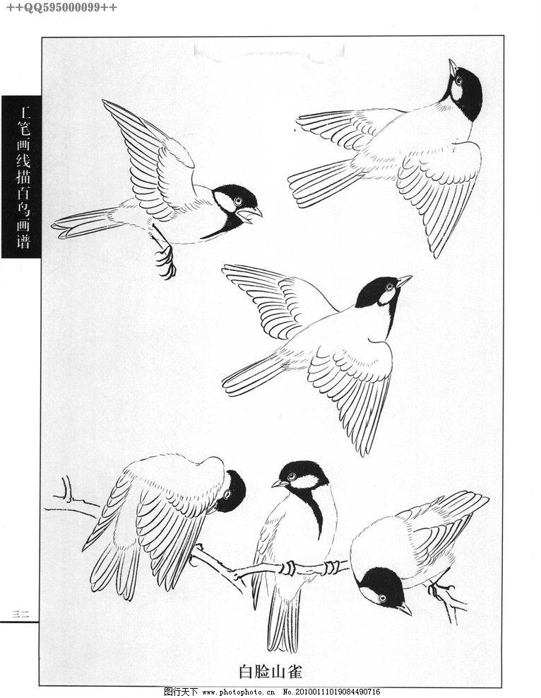 花鸟图11 工艺美术 美术 图案 花草 花鸟图 白描 线描 黑白稿 手绘