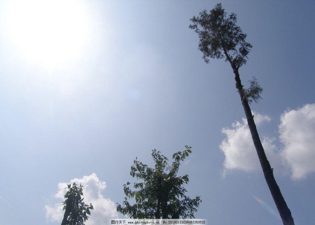 阳光 太阳 蓝天 白云 树 天空 晴朗 剪影 自然风景 自然景观 摄影 72
