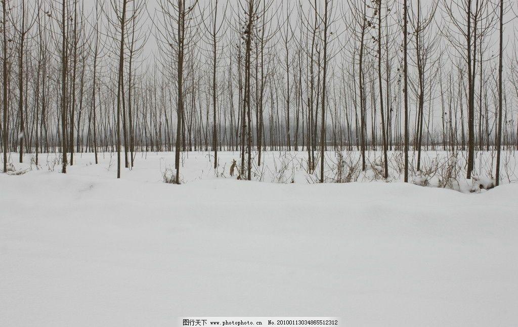 雪景 春夏秋冬