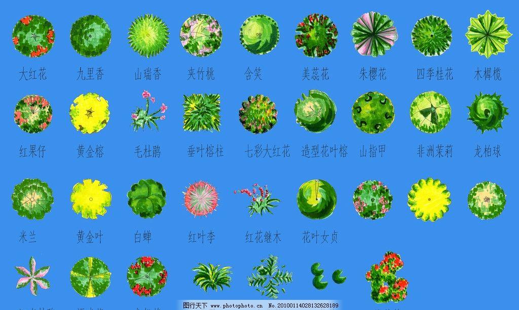 植物图例图片
