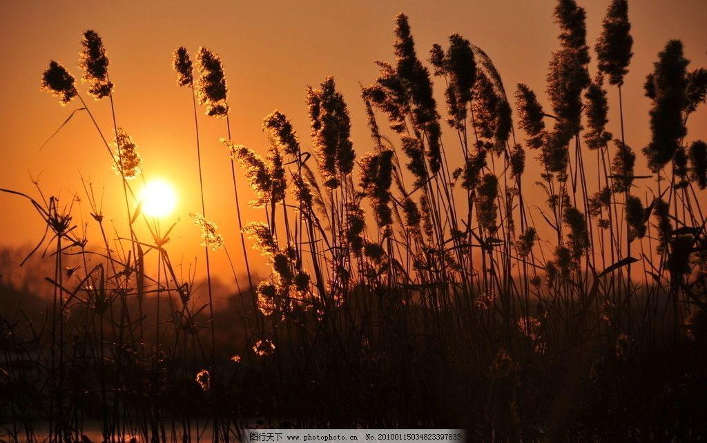 夕阳芦苇 三江夕阳 三江平原日落 自然风景 自然景观 摄影