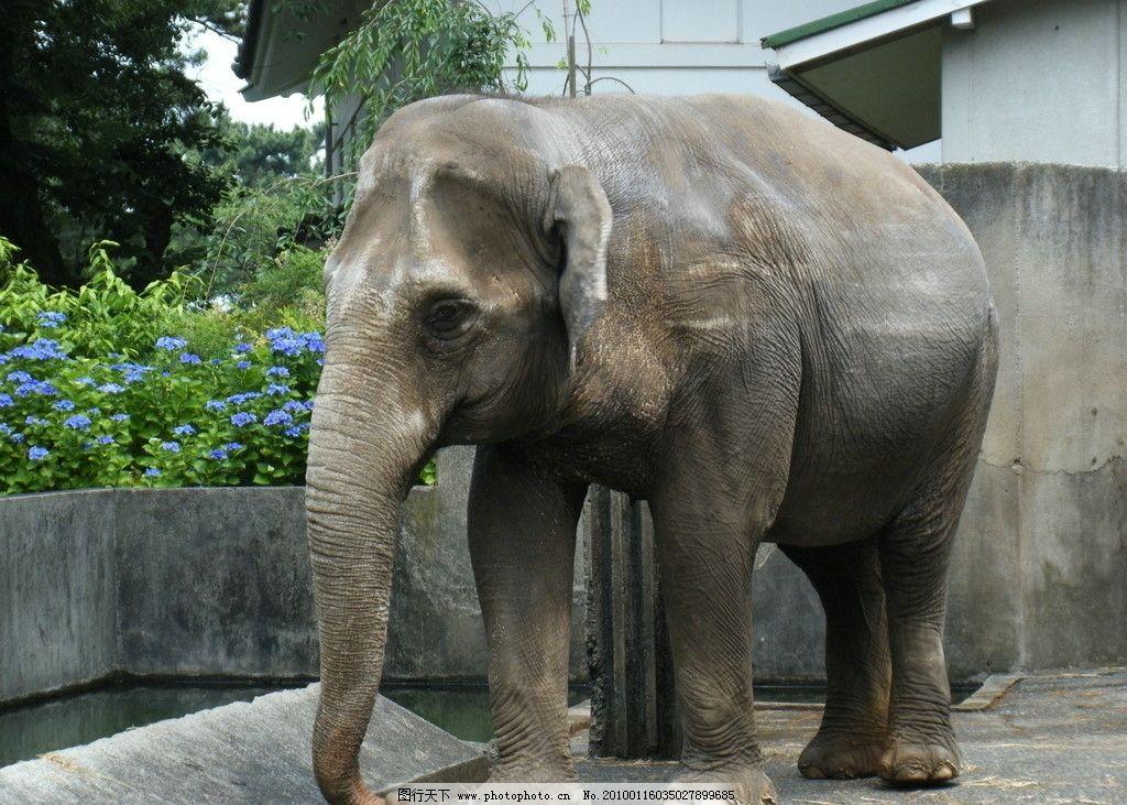 大象 象 近景 特写 实拍 动物园 旅游 野生动物 生物世界 摄影 72dpi