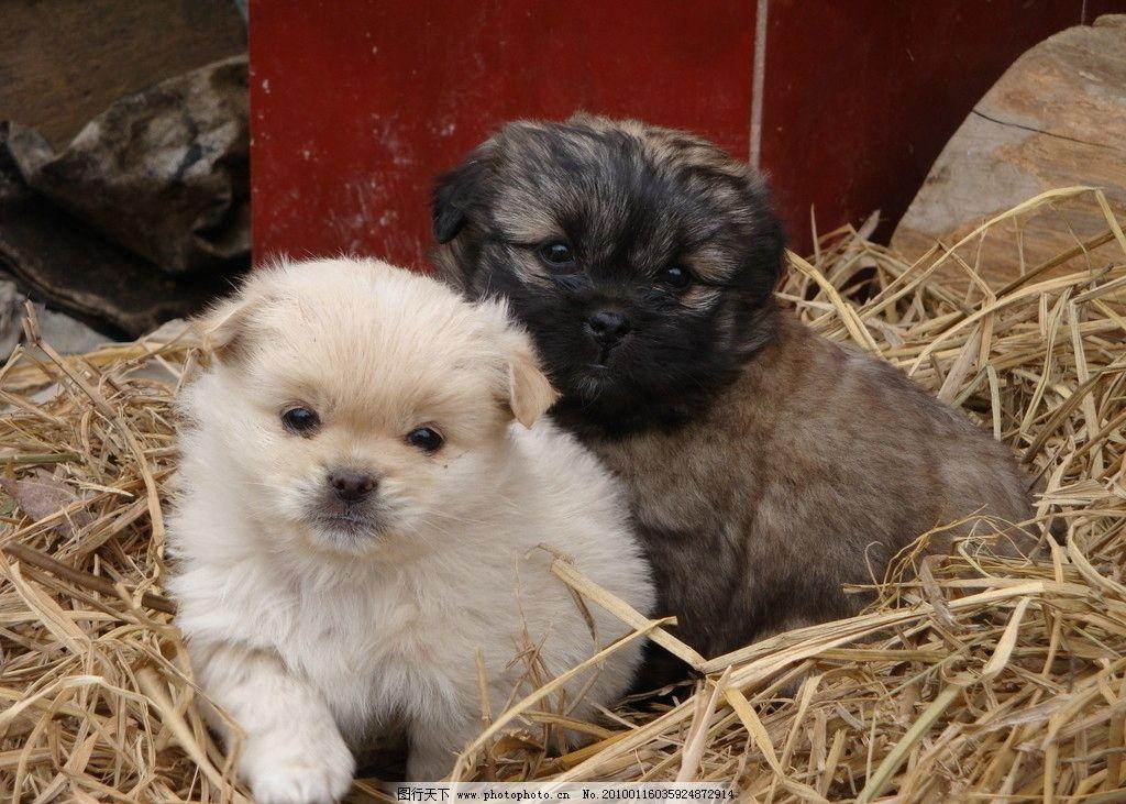 两只小狗 宠物 动物 小白 小黑 摄影