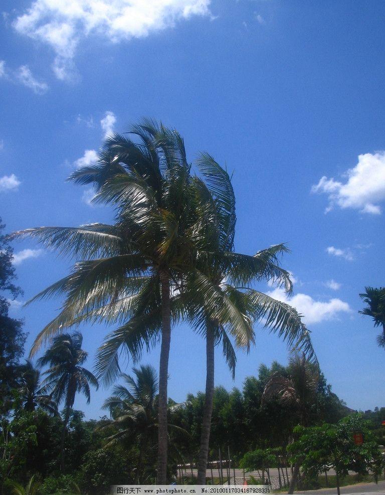 海南风光图片 海南风光 椰子树 海南 蓝天 白云 摄影图库 旅游摄影