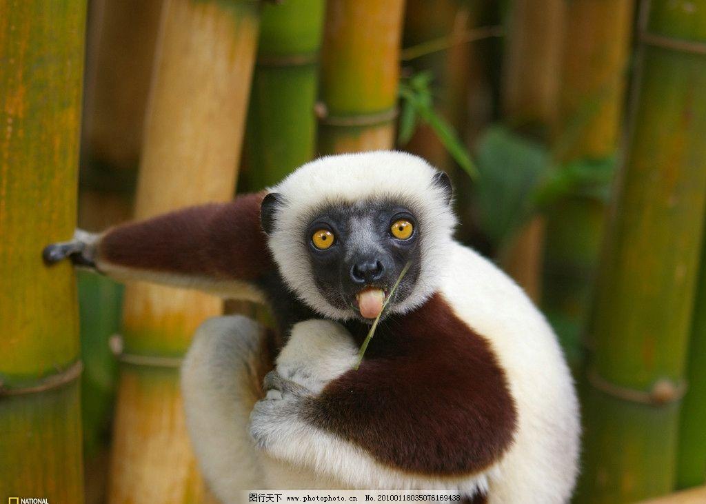 猴子树熊 世界地理动物篇壁纸 野生动物 生物世界 摄影 100dpi jpg