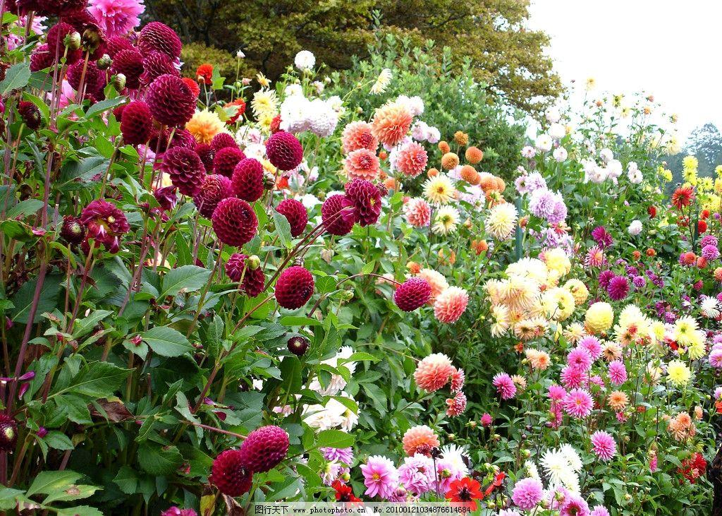 花团锦簇图片