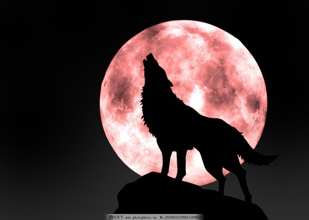 黑夜狼头像