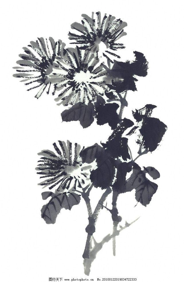 水墨画图片,水墨花卉 菊花 植物 花朵 国画 中国风-图