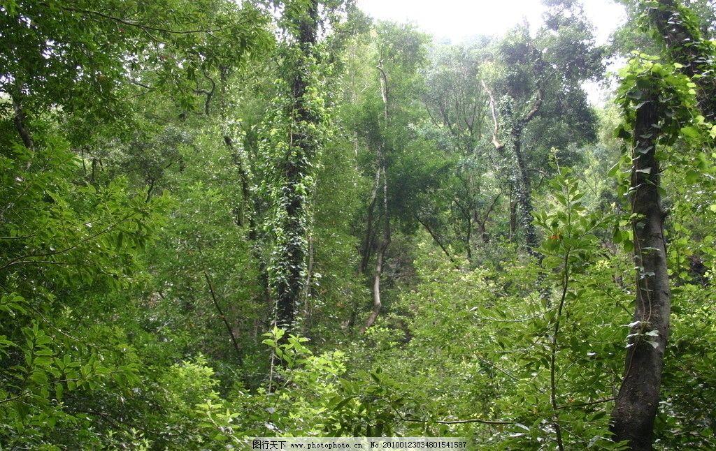 热带雨林 原始森林 植被 植物 树林 丛林 自然风景 自然景观