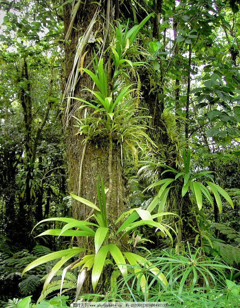 热带雨林 原始森林 植被