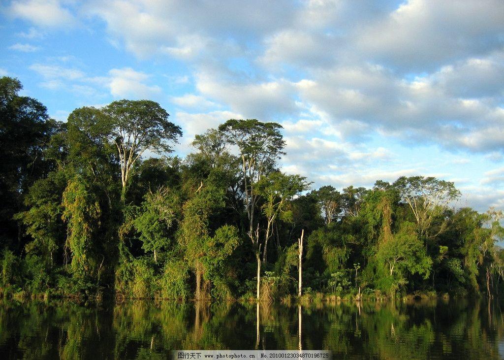 热带雨林 原始森林 植被 植物 森林 树林 丛林 热带 河流 自然风景图片