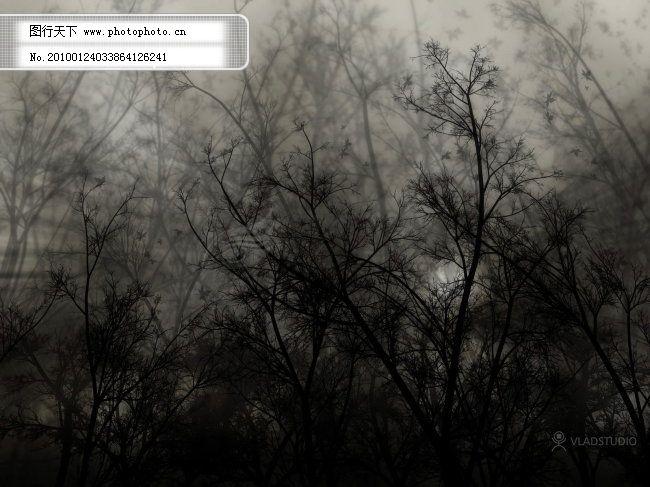 黑暗森林 黑暗森林免费下载 森林风景 图片素材 生物世界