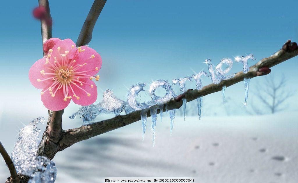 冬天 雪景 冰 阳光 冰雕 psd 分层 300dpi 红梅 腊梅 花 psd分层素材