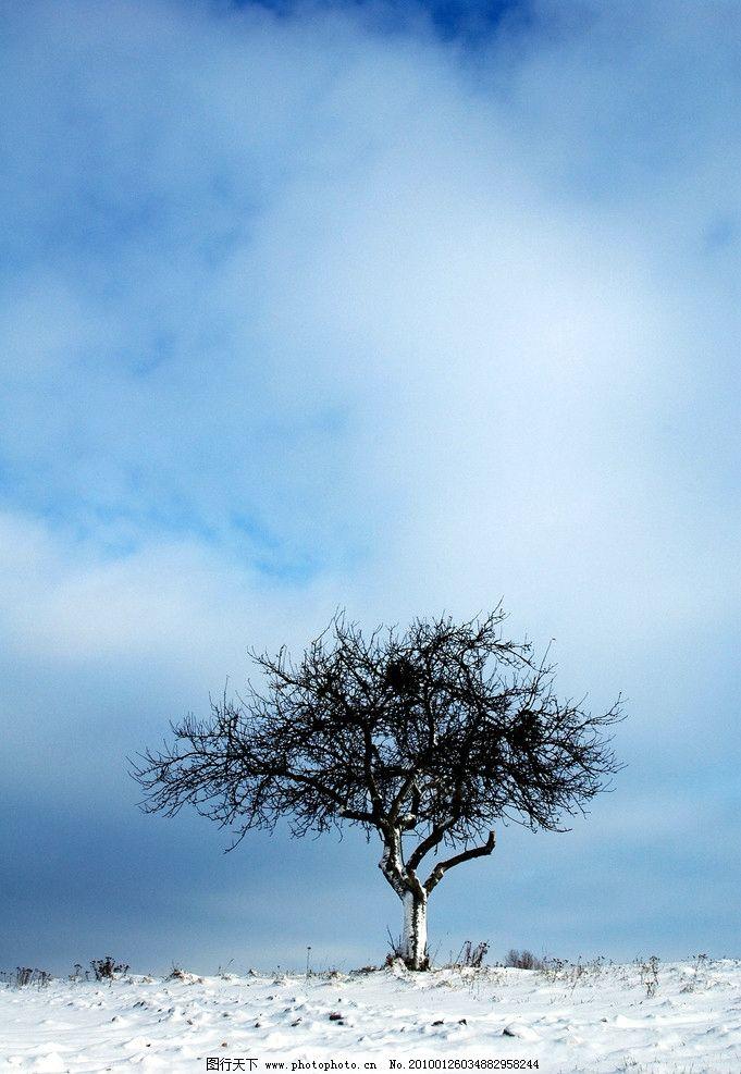 树木 雪地 雪景 雪地上的树 枯树 冬天 枯树滩 凋零 枯萎 冰天雪地
