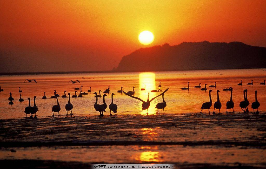 天鹅湖 天鹅 海 风景 美丽风景 日出 天鹅湖日出 国内旅游 旅游摄影