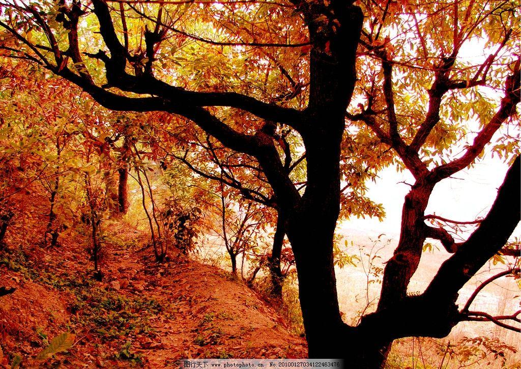 秋天 树林 树叶 红叶 风景 尧山风景 自然风景 旅游摄影 摄影图片