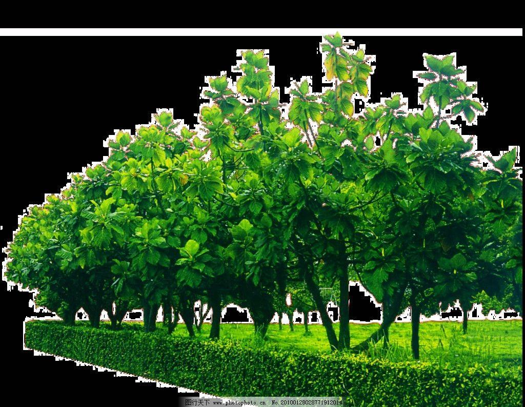植物图标图片