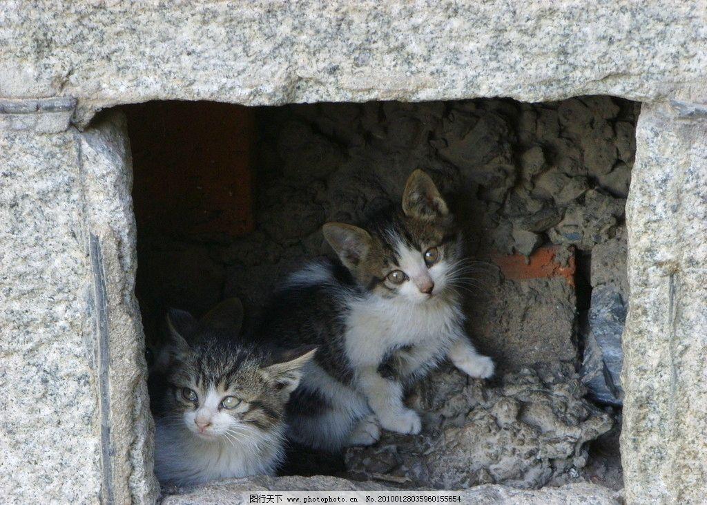 小猫 花猫 流浪猫 猫仔 洞 猫姐妹 校园里的猫 刚出生的 猫窝 家禽