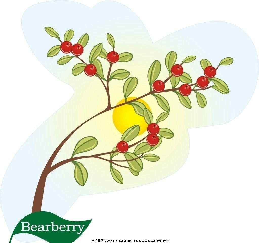 矢量植物 矢量花朵 熊果图片