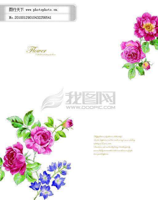 清雅玫瑰 清雅玫瑰免费下载 高贵 红花 两门图 英文字 紫色花