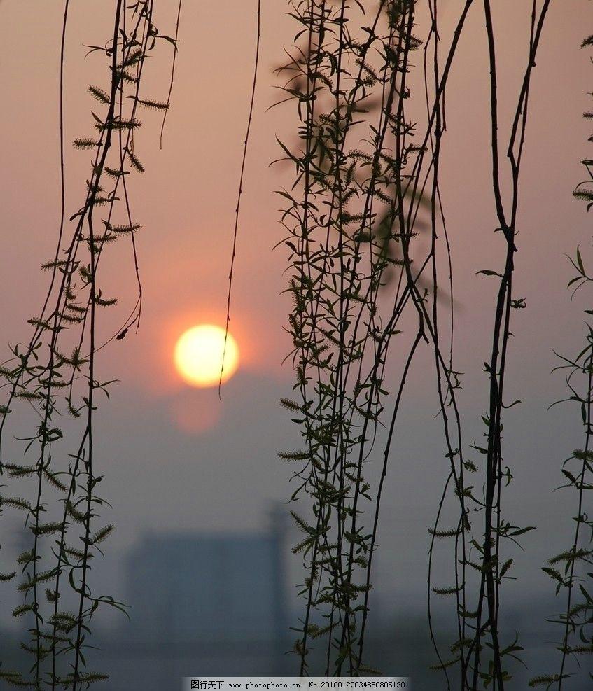 日出 太阳 黎明 升起的太阳 早晨 红日 自然风景 自然景观 摄影 300
