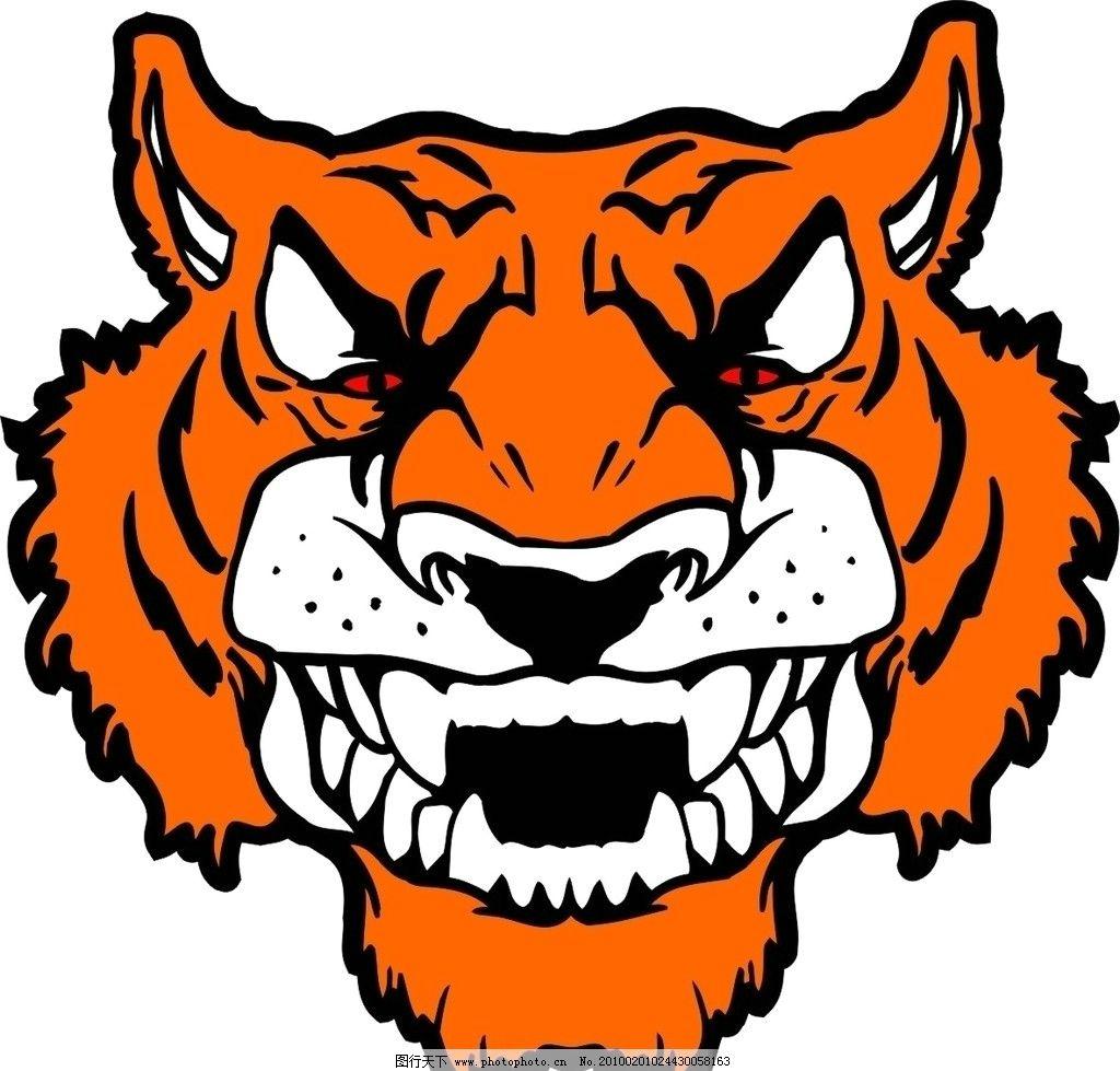 虎头2图片,老虎 动物 猫科动物 矢量-图行天下图库