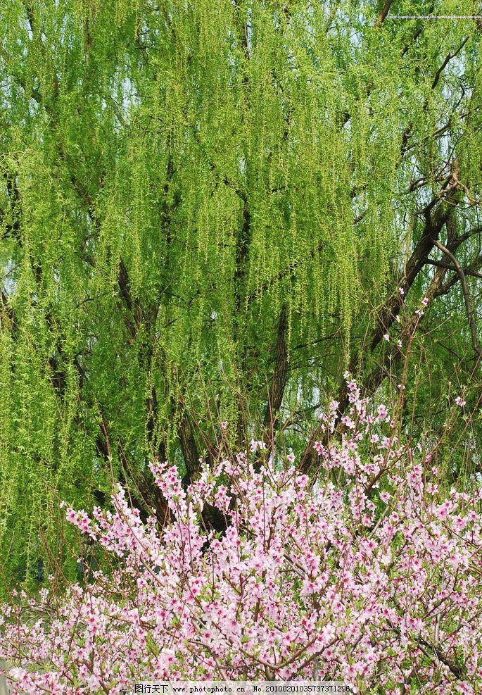 柳树桃花主题墙幼儿园