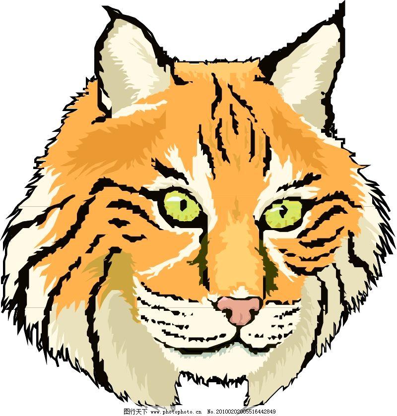 常见动物0385