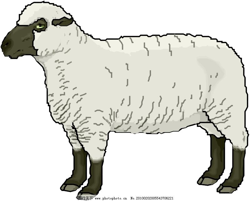 常见动物0929