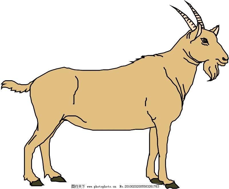 常见动物0581