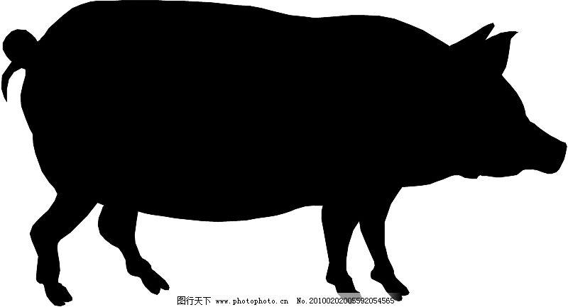 常见动物0893