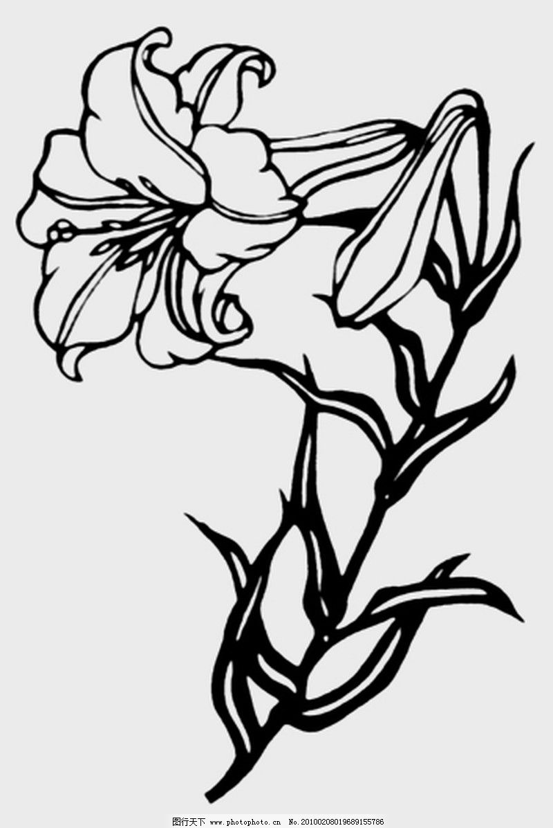 植物图案花纹0175