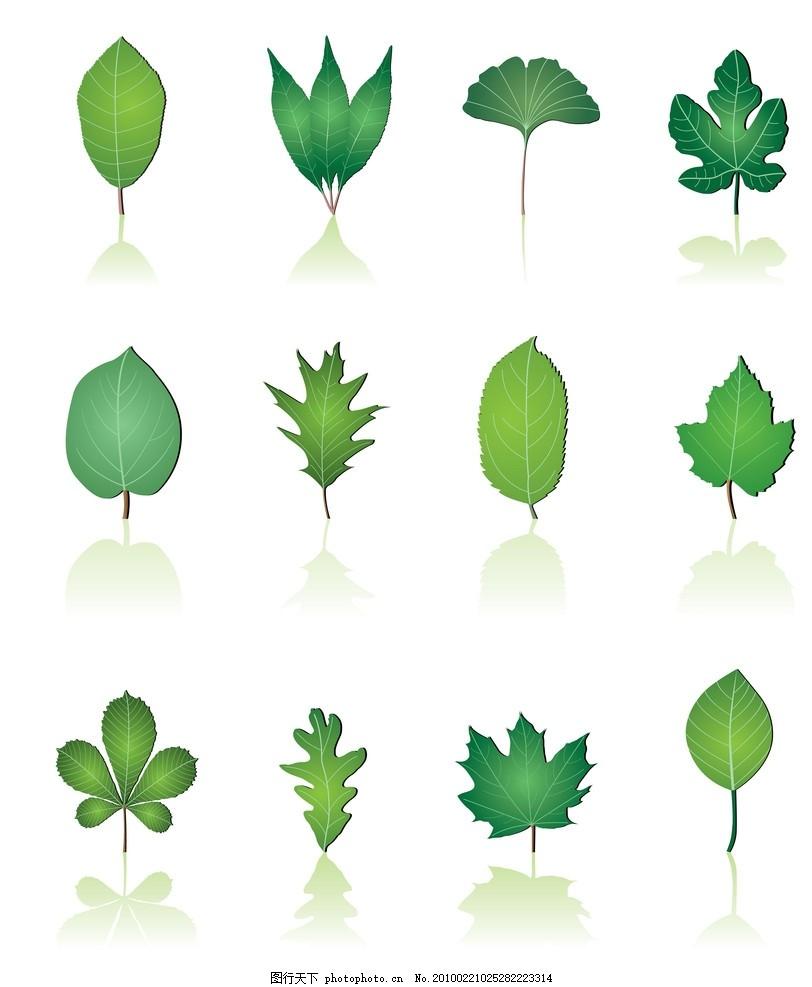 树叶主题矢量素材