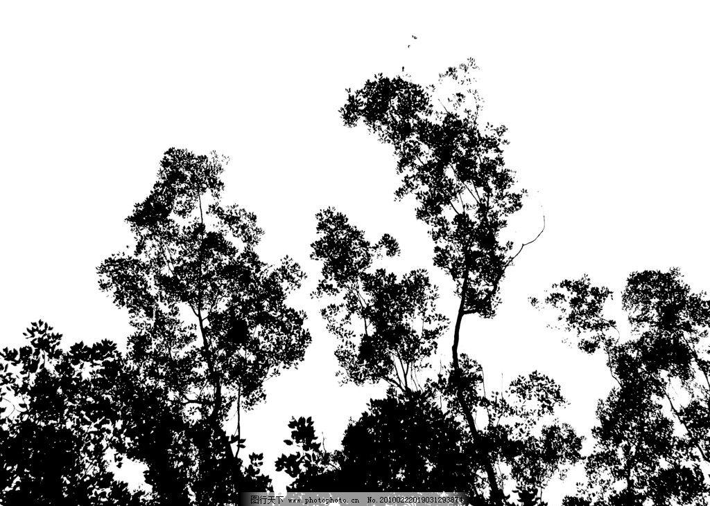 树木剪影2图片