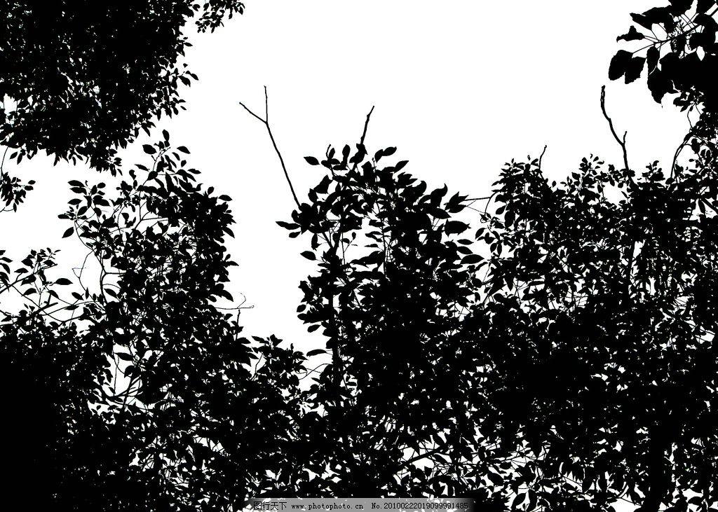 树木剪影4图片