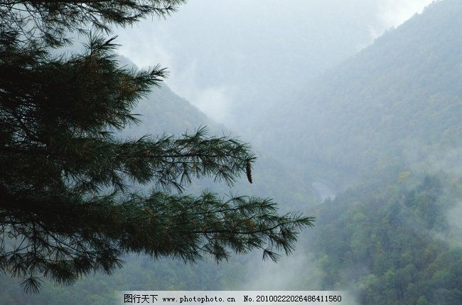 松树 高山 薄雾 松树免费下载 图片素材 风景生活旅游餐饮