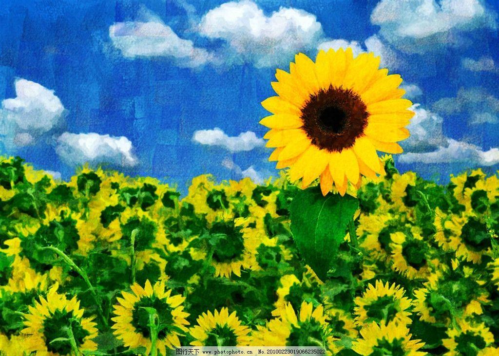 向日葵油画 向日葵 天空 白云 花卉 手绘 油画 装饰画 无框画 绘画