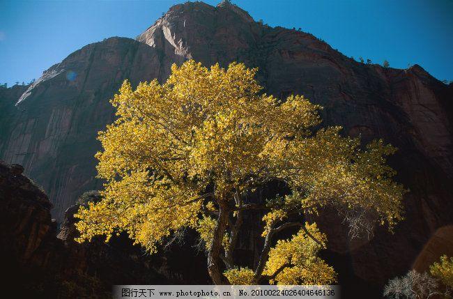 森林 绿树 高山 森林免费下载 自然景观 图片素材 风景生活旅游餐饮