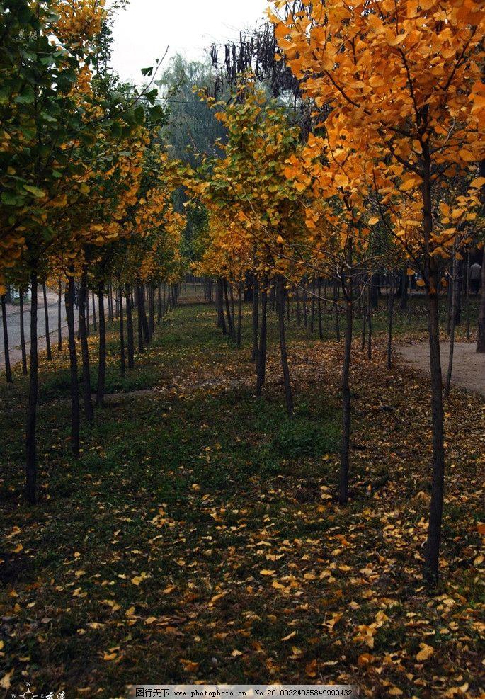 落叶 大自然 景观 景象 生物 植物 天空 云彩 田野 田园 花草 树木