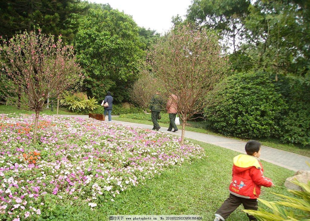 树木 花草 草地 广州天河公园 广州公园 公园 天河公园 国内旅游 旅游